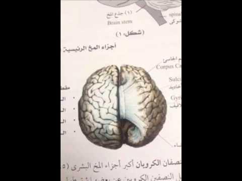 كتاب مخ الرجل لسوزان