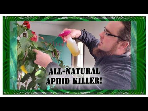 DIY All Natural Aphid Killer