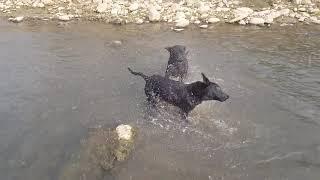 這是我們家族的「小犬」夏日消暑的大水池,夠大吧。