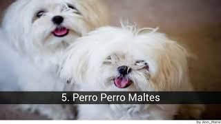 Лучшие породы собак для аллергиков