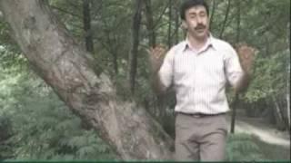 Talysh. IRAN. tolish muzic...