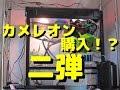 カメレオン購入!飼育ゲージセッティング!2/3 の動画、YouTube動画。