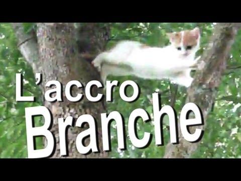 L'ACCROBRANCHE - PAROLE DE CHAT