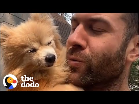 16-Year-Old Dog Steals Her Foster Dad's Heart | Ruff Life With Lee Asher