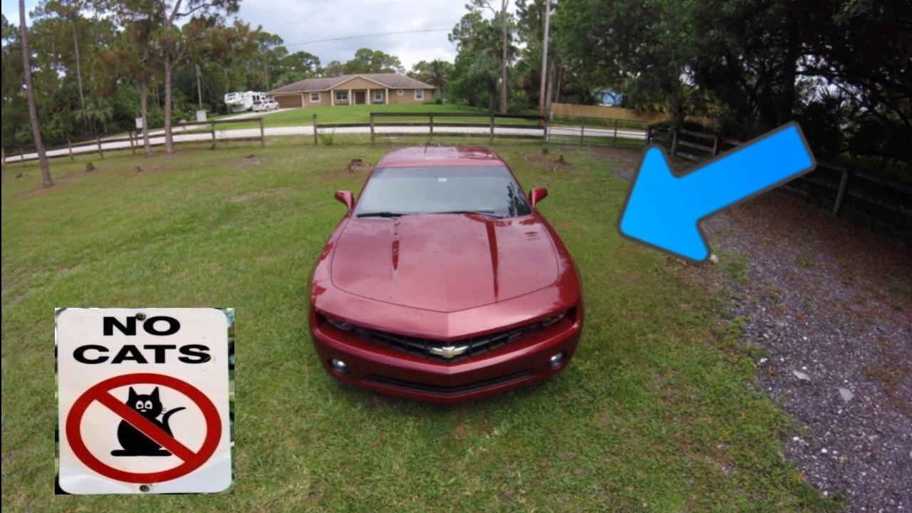 cat deterrent for cars