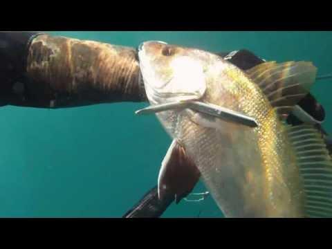 Podvodni ribolov - lov po rupama - kavala