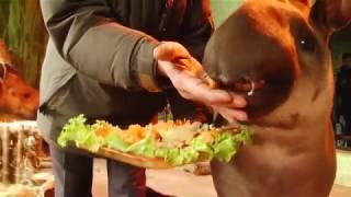 В нижегородском зоопарке обитателей кормят блинами
