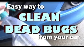 Easy Way to Clean & Remove Dead Bugs From Your Car