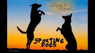 SPORTING DOGS - Jäger et Navi