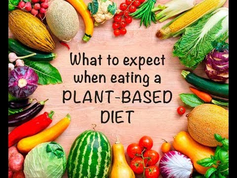 DAY 5  Plant based diet challenge