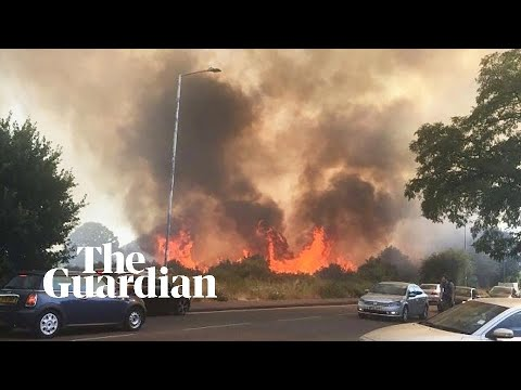 Epping Forest fire tackled by more than 225 firefighters