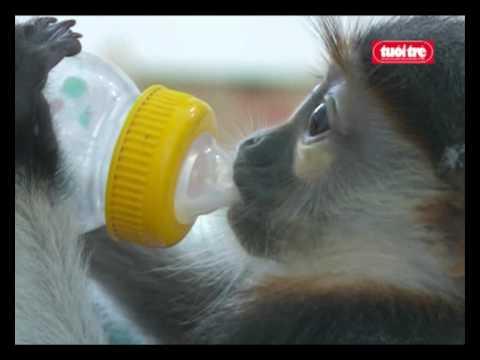 Bác sĩ của động vật hoang dã (Doctor wildlife )- tuoitre-online-trang chu.flv