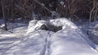 Следы животных на снегу в тайге