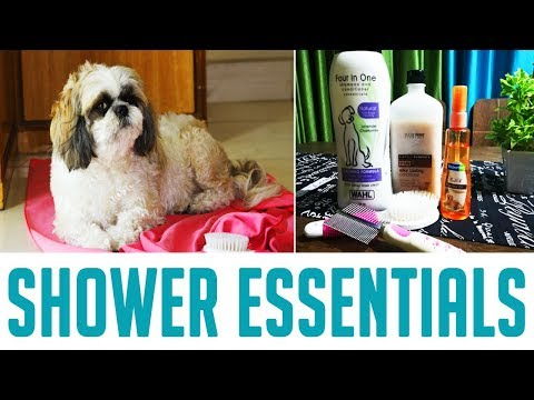 Shih Tzu Shower Essentials | Indian Petmom Sharing Important tips and Products for Shih Tzu
