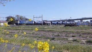【EF65/EF210】東北線貨物列車 新白岡-久喜⑦【EH500】