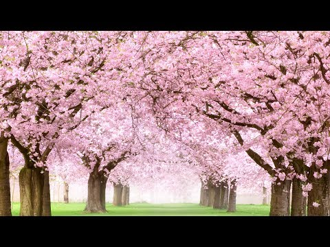 Peaceful music, Beautiful music, Instrumental music 'Golden Spring' by Nature With Music by Tim Janis