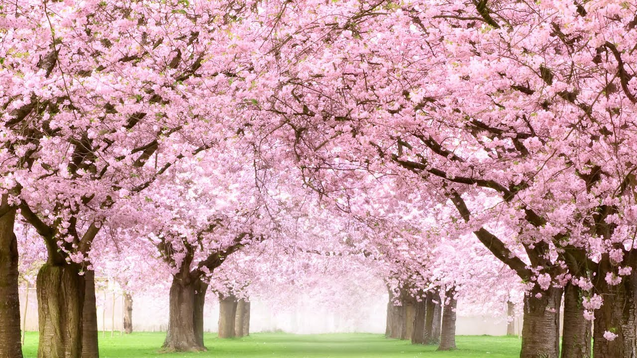 spring peaceful golden janis tim