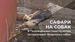 В Перми неизвестные по ночам отстреливают бездомных собак