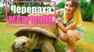 Самая БОЛЬШАЯ черепаха на Маврикий| Африка
