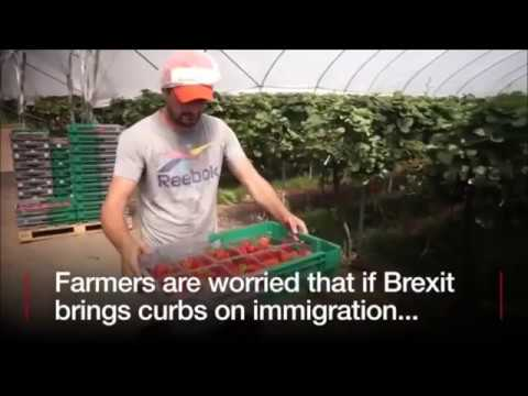 Farmers Admit They Can't Be Bothered Recruiting British People