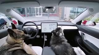 Tesla's NEW Dog Mode!  *Software Update*