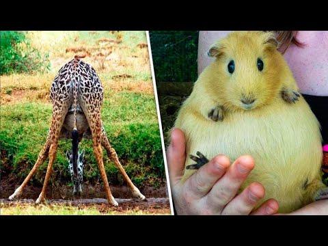 هذا هو الشكل الذي تبدو عليه الحيوانات وهى فى فترة الحمل.. حقائق مذهلة  - 15:51-2020 / 6 / 24