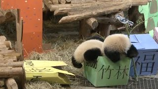 Repeat youtube video Twin Panda Cubs Celebrate First Birthday at Toronto Zoo