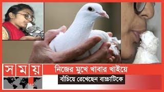 ভালবাসায় বেঁচে আছে কবুতরের বাচ্চা | Pigeons | Somoy TV