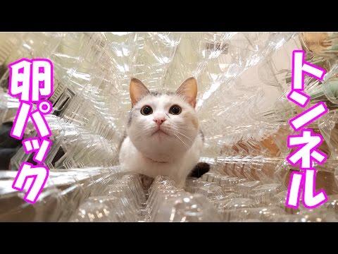 卵パックのボコボコトンネルを潜り抜ける猫 Cat egg pack tunnel