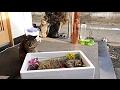 【地域猫】茶奈津か~ちゃんを最後に皆で天国へ送り出しました。【魚くれくれ野良猫】