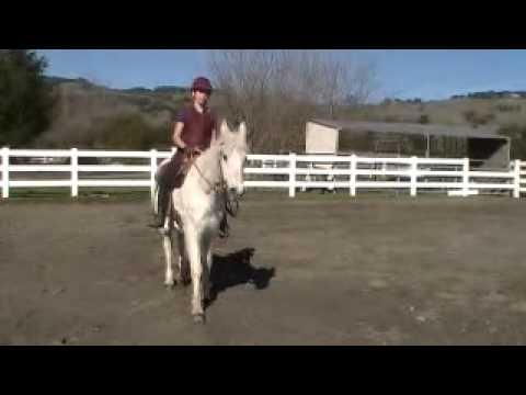Daisey arab rescue horse/ www.sonomachangeprogram.com