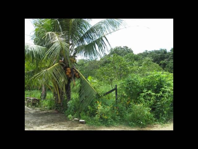 1080p HD Suriname 2010, Max Nijman; Ai Sranang