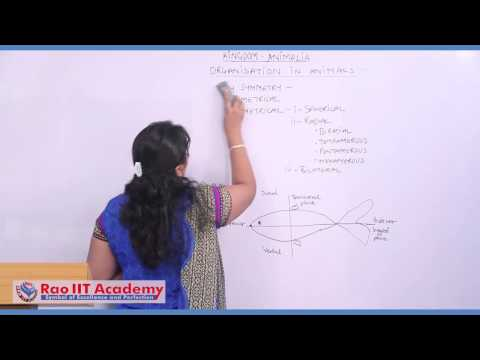 Introduction And Organisation - NEET AIPMT AIIMS Zoology Video Lecture [RAO IIT ACADEMY]