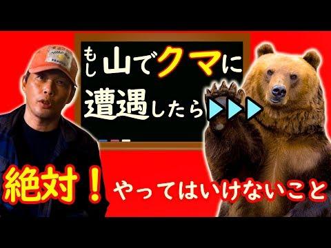 熊を駆除したハンター、銃の免許取り消しに