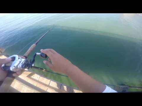 "California Halibut 26"" Ventura Pier, California"