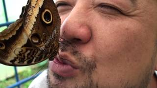 コスタリカのバタフライガーデンにて 北海道昆虫大好き! http://www17....