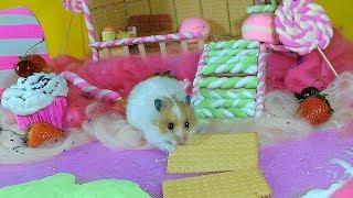 ХОМЯЧКИ В ПРЯНИЧНОМ ДОМИКЕ или СТРАНЕ КАРАМЕЛИ И ПЕЧЕНЬЯ The hamsters in the gingerbread house