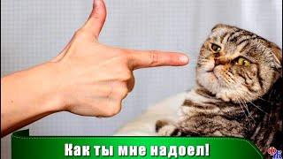 Еще раз так сделаешь вышвырну тебя на помойку а вместо тебя возьму маленького рыжего котенка