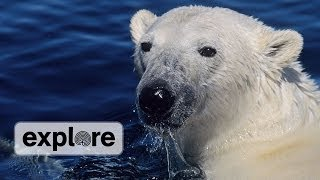 How Do Polar Bears Keep Warm?