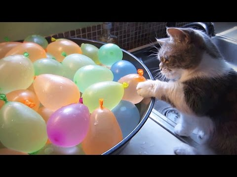 Thumbnail: Cats VS Balloons 😂🎈 Funny Cats Playing With Balloons [Funny Pets]