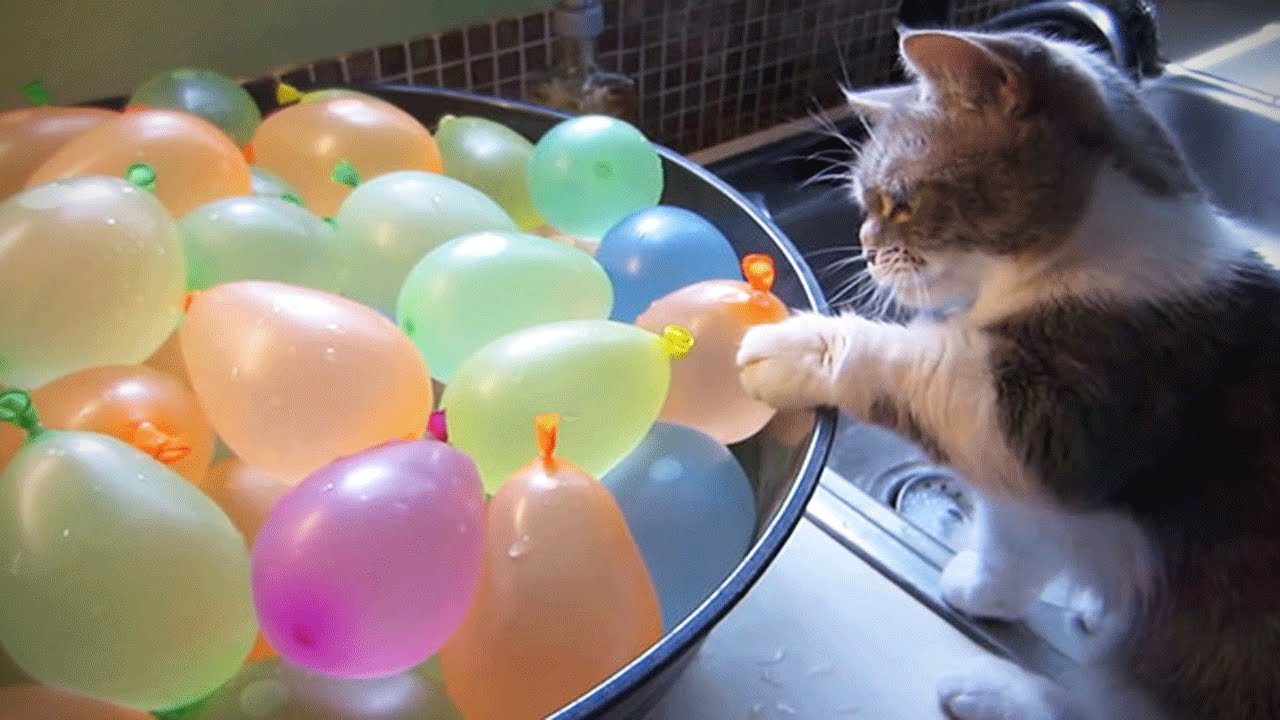 Cats VS Balloons 😂🎈 Humorous Cats Taking part in With Balloons [Funny Pets]