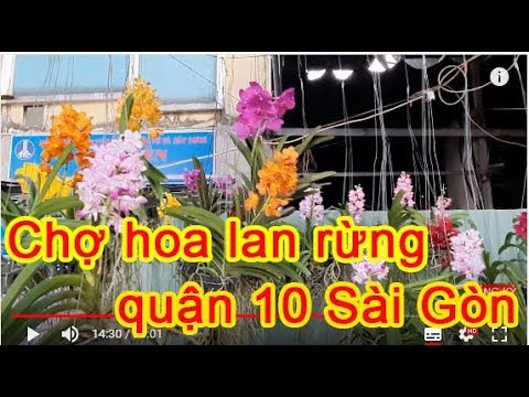 Chợ Hoa Lan Rừng Ở Sài Gòn – saithanhvlog