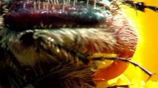 Секс у жуков : )) Sex at bugs.