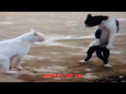 ListeTop10 – Lustige Katzen Videos zum Totlachen – Lustige Katzen Vine (6)