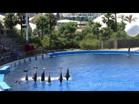 Walencja - 15 lipca 2010 - Delfiny w Oceanarium (pokaz)