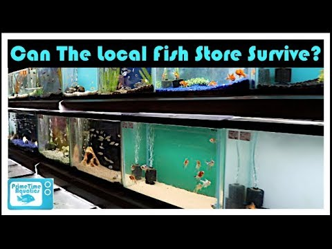 State of The Local Fish Store: Can They Survive??