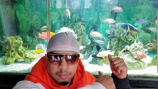 Hassan Campbell How I Do My Africa Cichlid Water Change