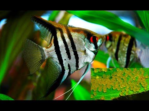 фото рыба самец
