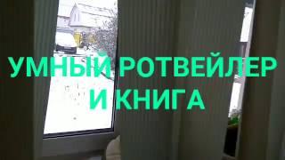 УМНЫЙ РОТВЕЙЛЕР И КНИГА.SMART ROTTWEILER AND BOOK