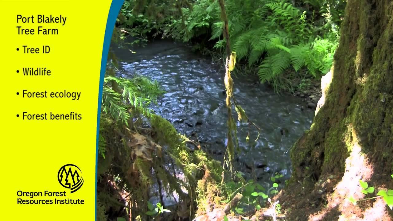 Port Blakely Tree Farms Youtube